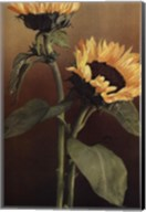 Isabell's Garden II Fine-Art Print
