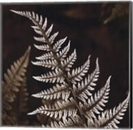 Heathers Feathers Fine-Art Print