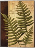 Fern Grotto III Fine-Art Print