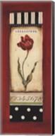 Belgian Tulip II - petite Fine-Art Print