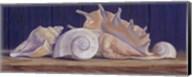 Shells II Fine-Art Print