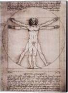 Vitruvian Man, 1492 Fine-Art Print
