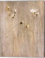 Vanilla Bloom II Fine-Art Print