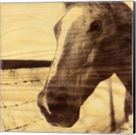 Portrait of a Horse Fine-Art Print