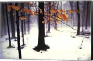 Quiet Woods Fine-Art Print