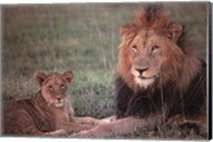 Lion and Cub Wall Poster