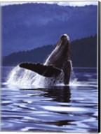 Humpback Whale Fine-Art Print