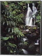 Rainforest Waterfall, Hawaii Fine-Art Print