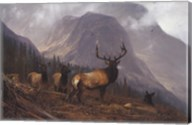 Bookcliffs Elk Fine-Art Print