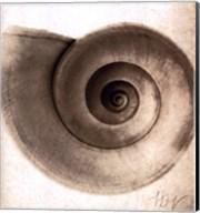 Snail Shell Fine-Art Print
