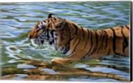 Afternoon Swim Fine-Art Print