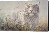 Monsoon- White Tiger (detail) Fine-Art Print