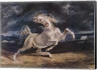 Frightened Horse Fine-Art Print