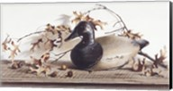Chesapeake Bay Canvasback Fine-Art Print