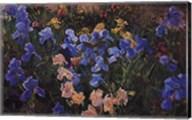 Iris Bed Fine-Art Print