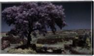 Wisteria Tree Fine-Art Print
