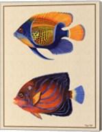 Tropical Fish III Fine-Art Print