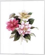 Camellias I Fine-Art Print