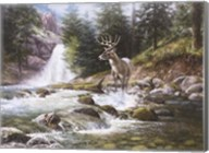 Bucks Near Waterfall Fine-Art Print