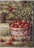 Apple Orchard Fine-Art Print
