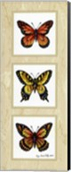 Monarch Butterflies Fine-Art Print