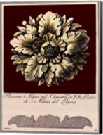 Rosone Antico II Fine-Art Print