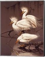Snowy Egrets Fine-Art Print