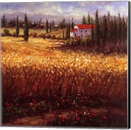 Tuscan Wheat Fine-Art Print