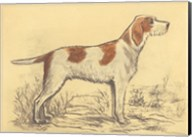 Hunting Dogs-Griffon Fine-Art Print