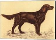 Hunting Dogs-Setter Fine-Art Print