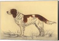 Hunting Dogs-Spaniel Fine-Art Print