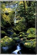 Elowah Falls Fine-Art Print