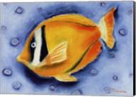 White Banded Island Fish Fine-Art Print