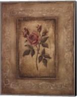 Savin Rose - Mini Fine-Art Print