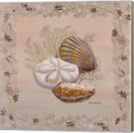 Pastel Shell IV Fine-Art Print