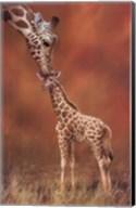 Giraffe Kiss Fine-Art Print