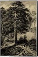 Wild Pine Fine-Art Print