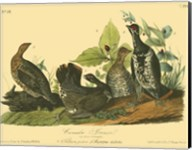 Canada Grouse Fine-Art Print