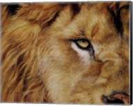 Eye of the Lion Fine-Art Print