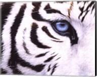 Blue Eye Fine-Art Print