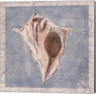 Framed Shells III Fine-Art Print