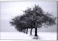Winter Tree Line I Fine-Art Print