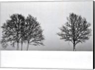 Winter Tree Line II Fine-Art Print