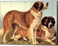 St Bernard Fine-Art Print
