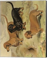 Dachshunds Fine-Art Print