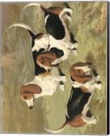 Basset Hounds Fine-Art Print