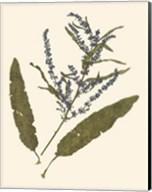 Pressed Botanical IV Giclee