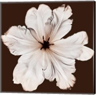 Ruffled Tulip Fine-Art Print
