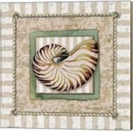 Nautilus Fine-Art Print