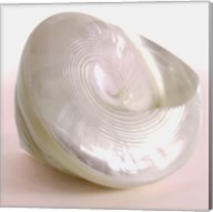 Shell II Fine-Art Print